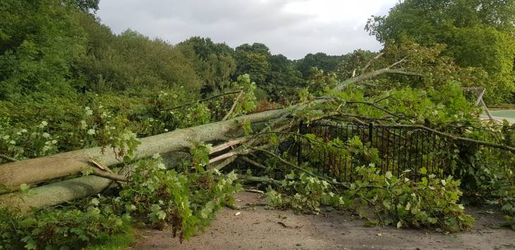 A large fallen tree on Southampton Common.