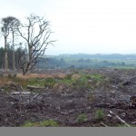 Photo of the scenes of desolation of the Larch Forests atop Longridge Fell