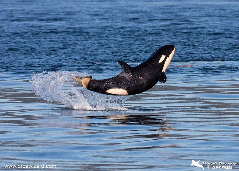 happy whale