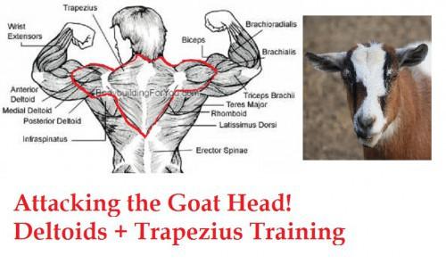back-muscle-chart