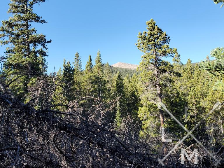 A view of sugarloaf mountain from the trail.  Pine trees are in the foreground with the mountain looming in the background
