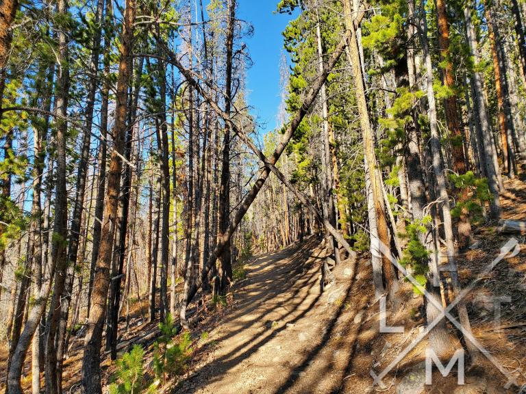 Pine trees surround the trail with two fallen trees form an x over the trail.