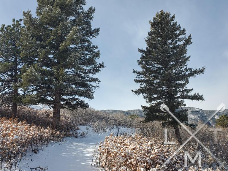 Two tall pine trees flanking either side of the snow covered trail with snow speckled bushes form the path at Sandstone Ranch Open Space.