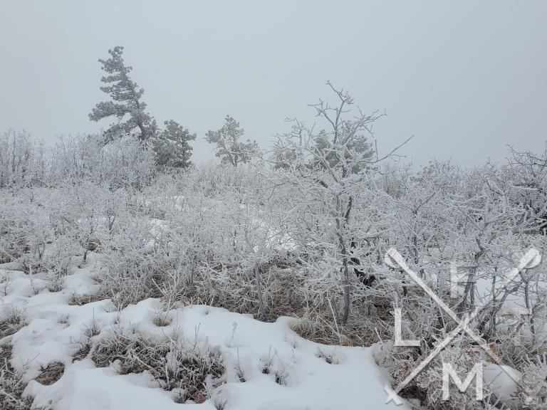 Some of the smaller trees and bushes at the top of Spruce Mountain.