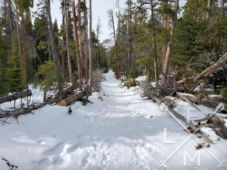 A narrow snowy trail at Rocky Mountain National Park.  Knowing snowshoe basics can lead to a lot of fun adventures.