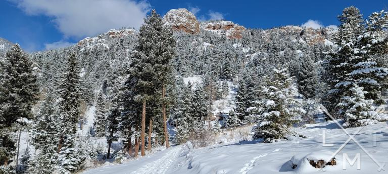 Snow covered pine and conifer trees rise from a snow blanketed ground. A narrow path leads toward the trees.