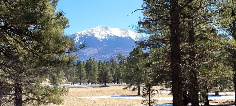 A large snow covered peak visible from between some pine trees at Kendrick Park Watchable Wildlife Trail