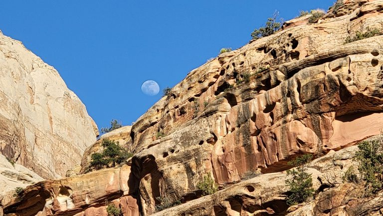 A pock marked canyon wall that has small holes and caverns throughout it at Grand Wash.  The moon also makes an appearance above the cliff.