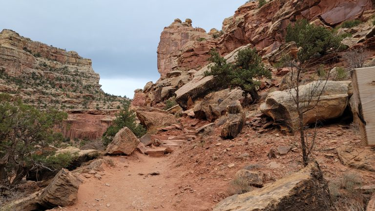 The start of the Cassidy Arch trail with some visible rock steps on the trail leading up the canyon.