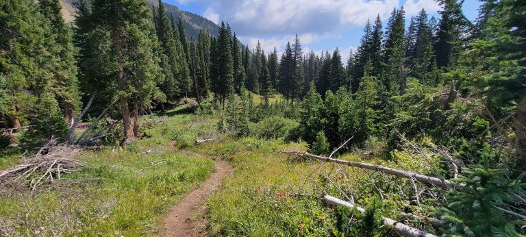 The trail make a sharp downhill turn through a clearing on the French Pass Trail.