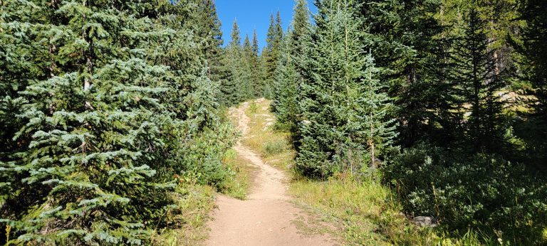 The trail snaking its way between the trees and up a hill from the Timberline Lake Trail.