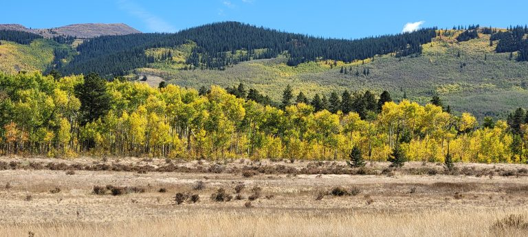 A hill with spots of yellow leaves in the distance and line of golden aspen leaves in the foreground as part of the fall colors of Colorado at Kenosha Pass