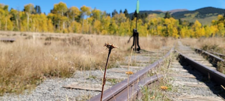 A dying sunflower growing out of an old railroad track with a line of golden trees in the background as part of the fall colors of Colorado Kenosha Pass