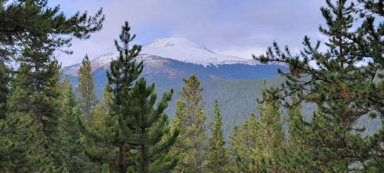 A snow capped peak is just visible through the trees from the upper section of the Bakers Tank Trail.