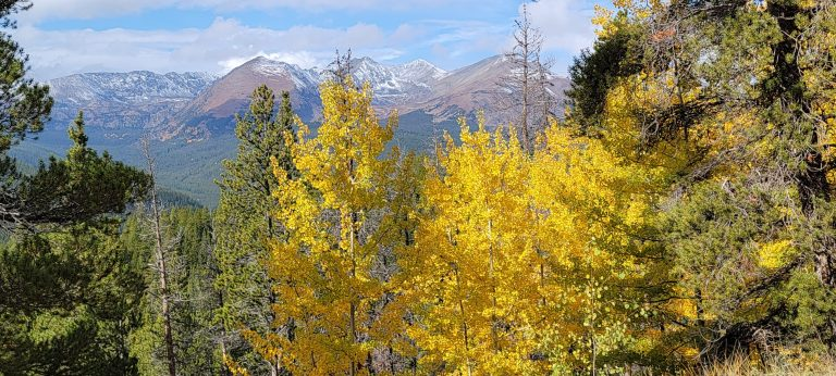 The snow covered peaks seen behind the golden leaves of aspen trees from Boreas Pass road.