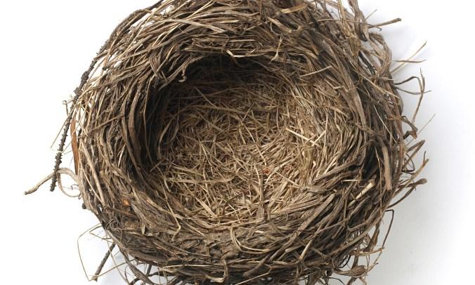 empty birds nest
