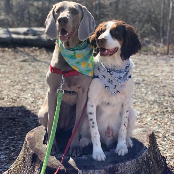 ELLA AND DERBY @ella_derbyadventures