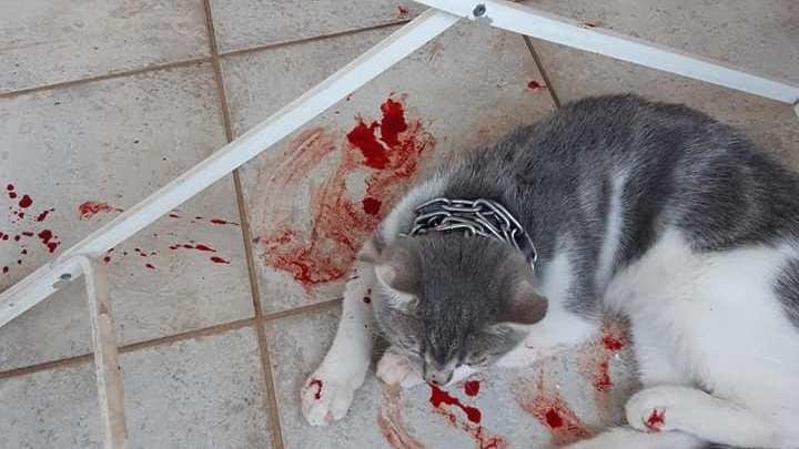 Far male ad un gatto, la bestemmia alla pietà