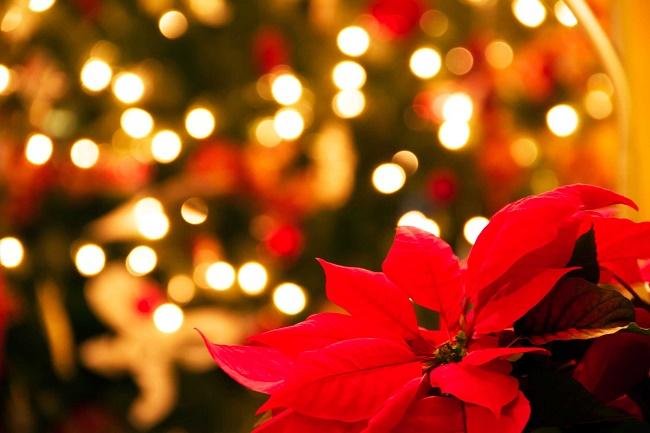 """Buon Natale per questo """"diario"""""""