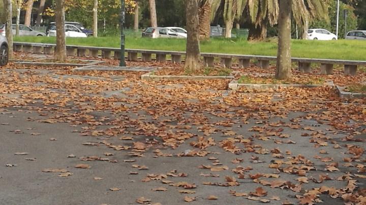 Latina che muore nella tomba di foglie di via Don Minzoni