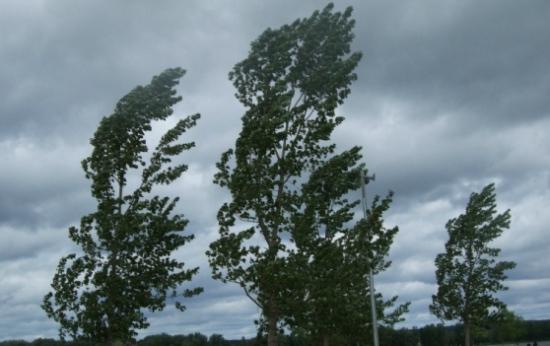 Latina nel vento con gli alberi che vengono giù