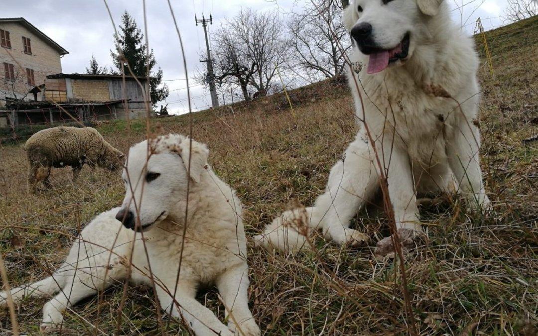 Se si vive in mezzo ai lupi si deve agire come un lupo. (Nikita Kruscev)