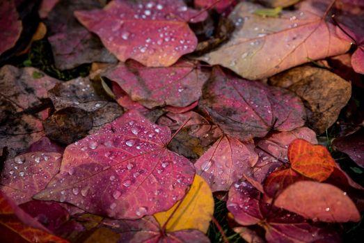 Couleur d'automne à Meise 005-1