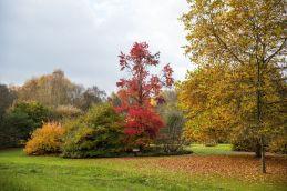 Couleur d'automne à Meise 024-7