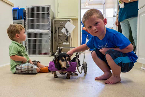 Open House - Faulkville Animal Hospital - Bloomingdale and Pooler, GA