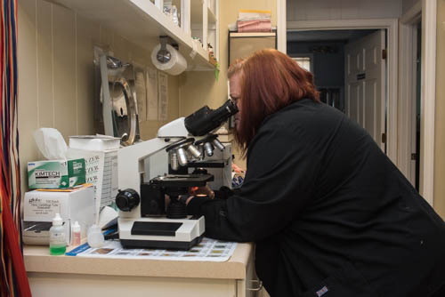 Tammy Looking in a Microscope - Faulkville Animal Hospital - Bloomingdale and Pooler, GA