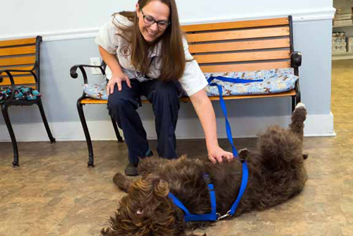 Dr. Holcombe Petting Moose - Faulkville Animal Hospital - Bloomingdale and Pooler, GA