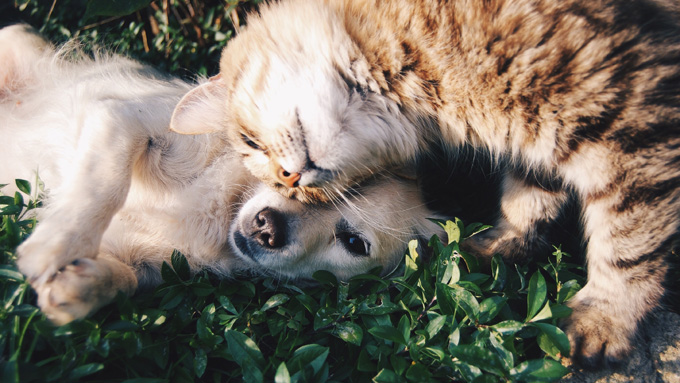 Dog and Cat Playing - Faulkville Animal Hospital - Bloomingdale, GA