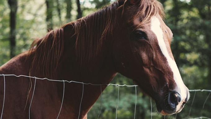 Horse - Faulkville Animal Hospital - Bloomingdale, GA
