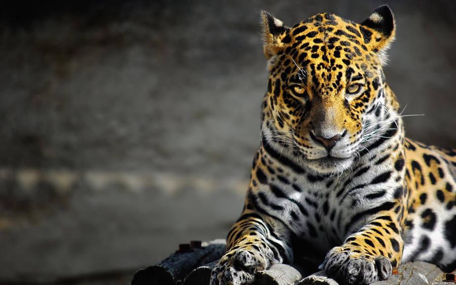 other portrait grass tiger predator head look sea animals