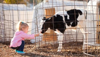 Children and Animals: Loving Some Species More Than Others