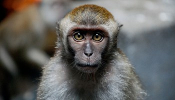 Alternatives To The Use Of Primates In Science