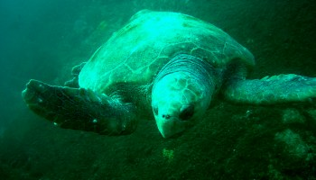 One Strategy For Preventing Turtle Bycatch