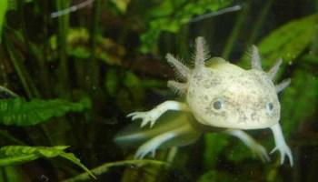 Exploring The International Trade In Amphibians