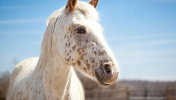 """Housing The """"Unwanted"""" Horses Of The U.S.A."""