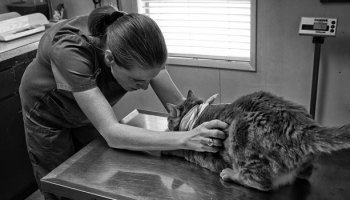 Veterinarians And Compassion Fatigue, AKA Secondary Traumatic Stress