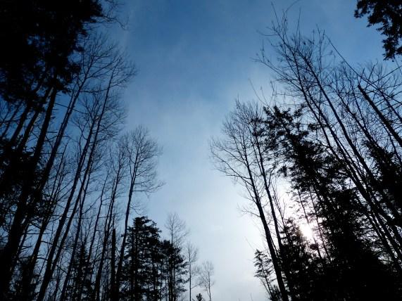 Durminskoye Reserve, Siberia