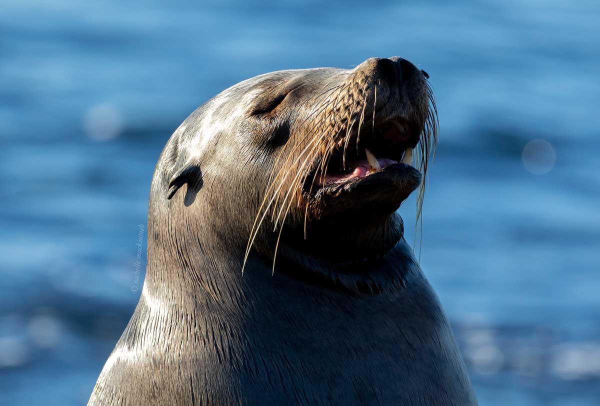 galapagos islands sea lion sunbaking