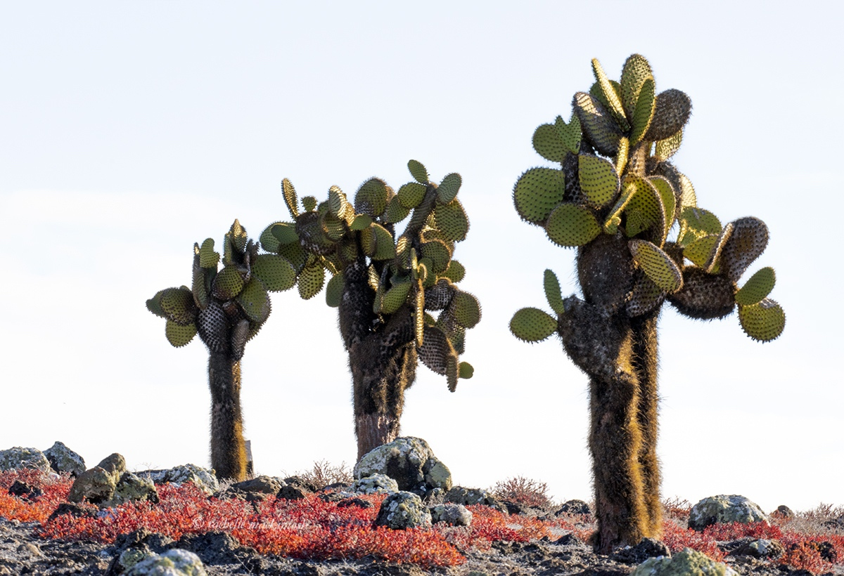 galapagos islands ecuador trees