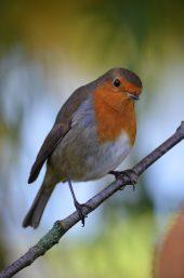 activité nourrisage oiseaux