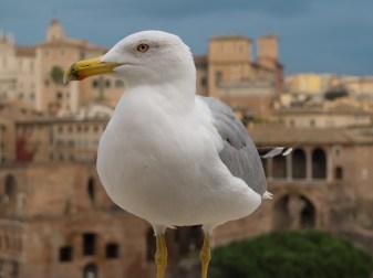 Portrait of said seagull