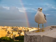 This seagull wanted me to take his picture with the rainbow as a backdrop.