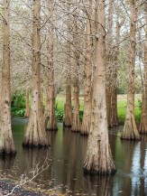 Water Trees - Post Processed