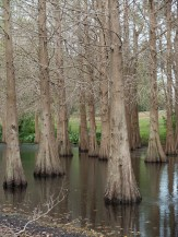 Water Trees - Original