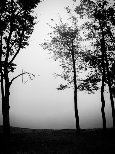"A foggy morning made to look like the game ""Limbo"" / Fujifilm X10"