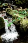 El Yunque / Leica M-P / Summilux 50mm